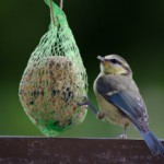 Jetzt im Winter Vogelfutter selber machen