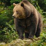 Ein bäriges Erlebnis: Der Alternative Bärenpark Worbis
