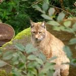 Kinder entdecken heimatliche Tiere im Tierpark Olderdissen