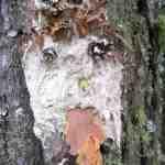 Basteln mit Naturmaterialien: Die Waldwichtel kommen