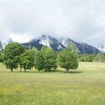 Österreichische Küche am Lagerfeuer: Holzfällersuppe aus der Steiermark