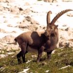 Outdoor Familien aufgepasst! Drei Top Nationalparks in Deutschland