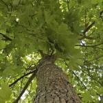 """Vaude Nachhaltigkeitsbericht 2013 """"Wir lassen uns bewusst messen und bewerten"""""""