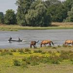 Urlaub in Brandenburg: Hochwasser war gestern