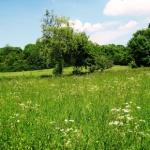 Interview mit dem Koch Friedrich Klumpp: Unkraut gibt es nicht! Heilpflanzen und Kräuter nutzen allen!