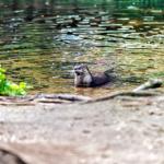 Alles Outdoor, Otter was? Ein Besuch im Otterzentrum Hankensbüttel