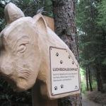 Outdoor-Urlaub in Serfaus-Fiss-Ladis: Expedition zum Wolfsee