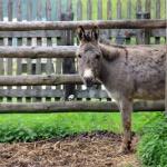 Garantiert quengelfrei wandern!  Esel, Habicht, Lama & Co. und die Kinder wandern gerne