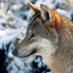 Vier Top Wildparks: Bären, Luchse, Hirsche hautnah erleben