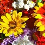 Gewonnen! Drei Blumensträuße von blume 2000 für den Omatag