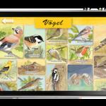 Kinder App: Erlebnis Wald