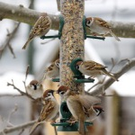 Vögel füttern, aber richtig!