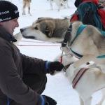 Schlittenhunde: Mit dem tierisch besten Freund durch die weiße Winterpracht