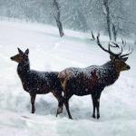 Den Winter im Nationalpark Bayerischer Wald erleben