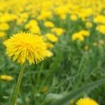 Heuschnupfen: Fünf Tipps damit Outdoor Kids nicht die Nase voll haben