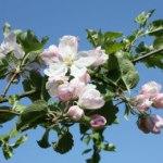Osterferien 2014: Fünf Tipps für einen tollen Ausflug