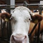 Urlaub auf dem Bauernhof: Die zehn besten 2013