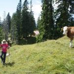 Urlaub in Bayern: Maibaumkraxeln, Obst ernten oder Senner auf Zeit