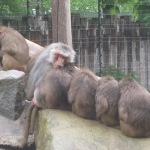 Zoo im dunkeln: Safari bei Nacht!