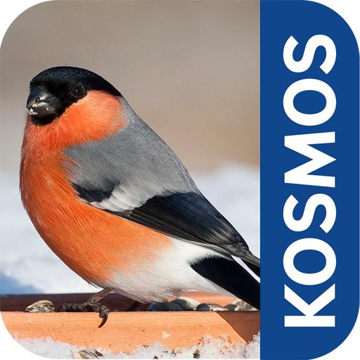 Berühmt Vögel im Winter: Füttern und erkennen dank einer App #UL_22