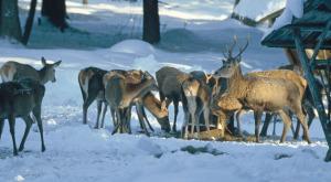 Stade Zeit im Karwendel: Bei einer Wildfütterung dabei zu sein ist für die Kinder ein großes Erlebnis. Foto (c) alpenwelt-karwendel