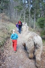Südtirol ist ideal für Lamas. Unternehmt mal eine Wanderung am Ritten mit diesen braven Tieren.  Foto (c) kinderoutdoor.de