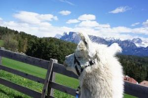 """""""Ja sein ma denn do in de Anden?"""" Nein, das ist Südtirol und im Hintergrund erkennt ihr den Schlern. foto (c)kinderoutdoor.de"""