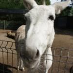 Wandern mit Kindern und Tieren in Hessen: Esel, Lamas und Schlangen