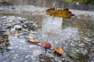 Kastanie mit Segel!  Foto (c) Kinderoutdoor.de