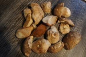 Steinpilze sind perfekt für ein leckeres Risotto. Foto (c) kinderoutdoor.de