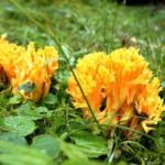 Pilze sammeln mit Kindern: Schau mit unter den Hut!