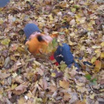 Schnitzeljagd im Herbst: Kaum zu lauben