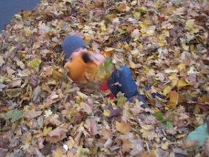 Laubhaufen ist ein wunderbares Spiel für die Schnitzeljagd.  Foto (c) Kinderoutdoor.de