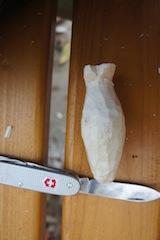 So bekommt der Pinguin Flossen.  Foto (c) kinderoutdoor.de