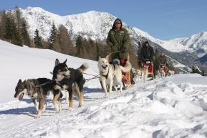 Alaska? Nein, Husky-Schlittenfahren in Livigno, in der Lombardei! Foto (c) Lungolivigno/ Lombardei