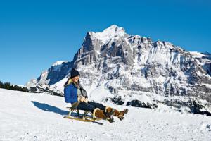Rodelbahn vor gigantischer Kulisse! Die längste Schlittenbahn Europas führt vom Faulhorn 15 Kilometer hinab nach Grindelwald. Foto (c) Stephan Schacher, Switzerland Tourism
