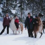 Winterwandern mit tierischen Begleitern