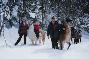 Winterwandern ohne quengelnde Kinder. Die sitzen nämlich auf den Lamas! Foto © Tourismusverband Werfenweng, Bernhard Bergmann  Gut Wenghof – Family Resort