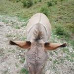 Eselwandern, Lamas und andere tierische Begleiter
