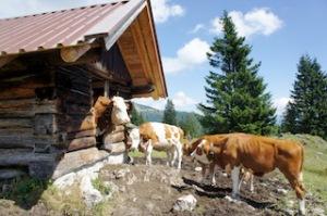Urlaub auf der Alm: Da gehört auch tierische Nachbarschaft dazu.  Foto (c) kinderoutdoor.de
