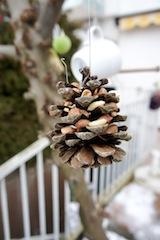 Hier baumelt der Vogelfutter-Zapfen und wartet auf Gäste.  Foto (c) kinderoutdoor.de