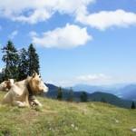 Wandern mit Kindern im Frühling: Drei Insidertipps!