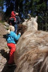 Alles Glück dieser Erde liegt auf dem Rücken der Lamas. Ein lohnendes Outdoor Ziel im Frühling ist die Kisselmühle bei Eltville in Hessen. Hier gibt es Lama- und Kameltouren! Foto (c) kinderoutdoor.de