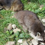Familienausflug in den Osterferien: Drei heiße Tipps!