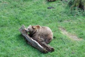Die Bären sind los im Wildpark Knüll.  Foto(c) kinderoutdoor.de
