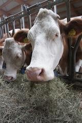 Eine Packliste für den Urlaub auf dem Bauernhof und der Stallgeruch bleibt am Ferienort.  Foto (c) kinderoutdoor.de