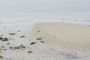 Außer Rand und Sand! Was für eine Düne! Auf Helgoland erfahrt Ihr auf dem Naturlehrpfad einiges über das Leben auf der Düne.  Foto (c) kinderoutdoor.de