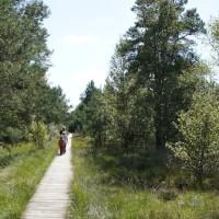 Bohlenweg, aber ohne Dieter. Der Naturlehrpfad führt Euch durch´s Moor.   Foto (c) kinderoutdoor.de