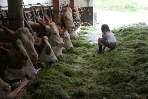 Beim Bergsommer in Südtriol dürfen die Kinder auf den Bauernhöfen auch mitanpacken.  Foto (c) kinderoutdoor.de
