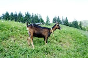 Wandern ohne Gemecker! In Schenna gibt es etliche Geocaching Touren.  Foto (c) kinderoutdoor.de